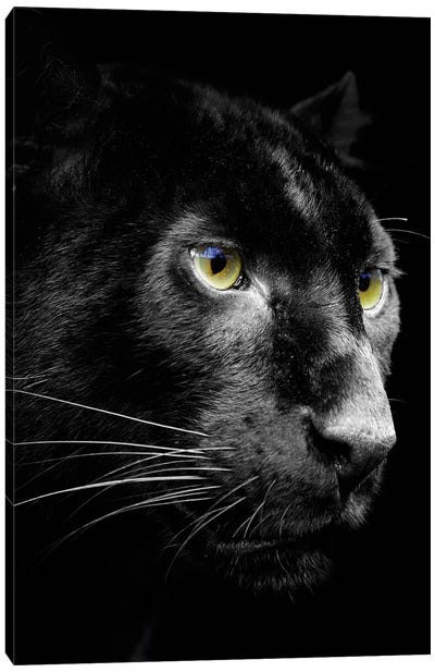 Dark Jaguar Canvas Art Print