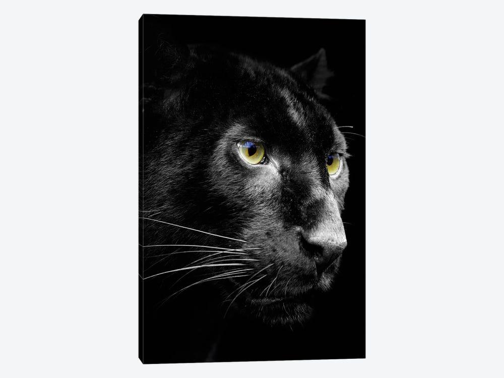 Dark Jaguar by Wouter Rikken 1-piece Canvas Art