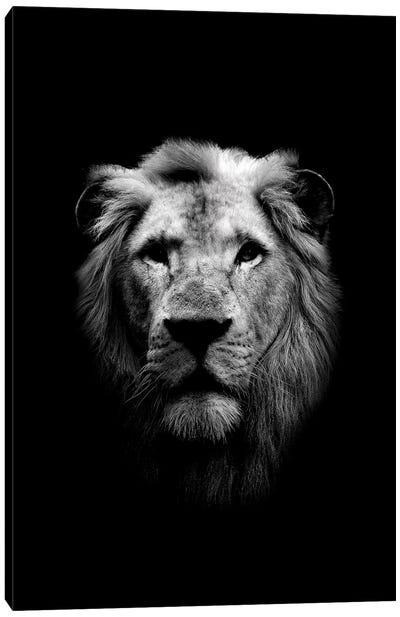 Dark Lion Canvas Art Print