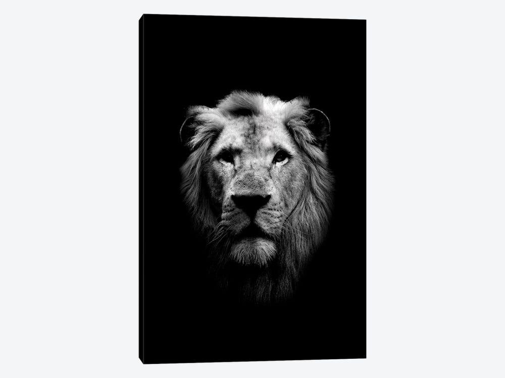 Dark Lion by Wouter Rikken 1-piece Canvas Art Print