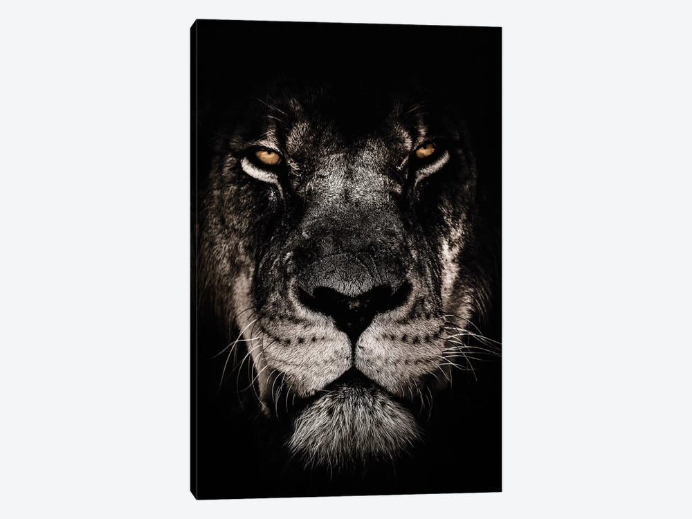 Dark Lion, Close-Up by Wouter Rikken 1-piece Canvas Wall Art