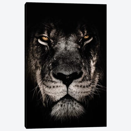 Dark Lion, Close-Up Canvas Print #WRI28} by Wouter Rikken Canvas Art