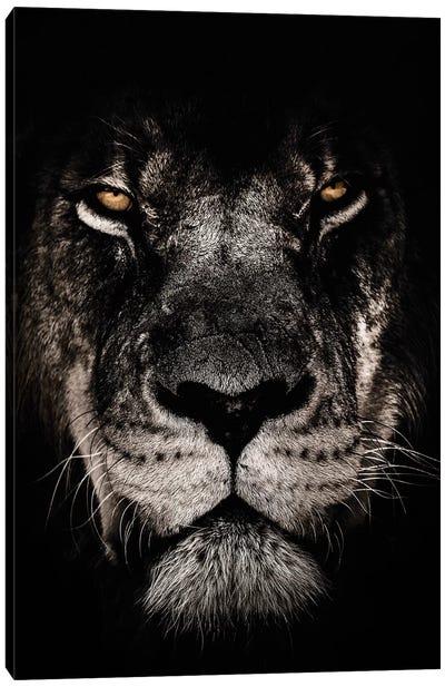 Dark Lion, Close-Up Canvas Art Print
