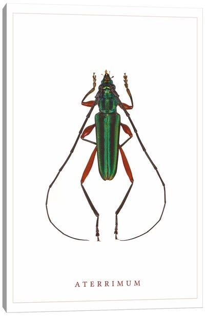 Aterrimum Beetle Canvas Art Print