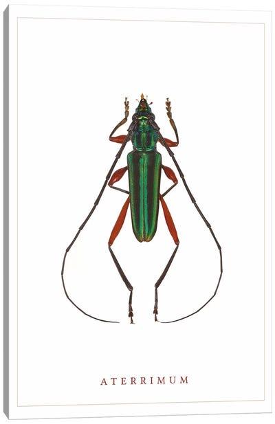 Aterrimum Beetle Canvas Art Print
