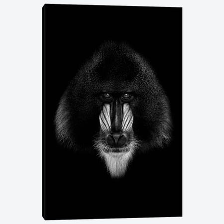 Dark Mandrill 3-Piece Canvas #WRI30} by Wouter Rikken Art Print
