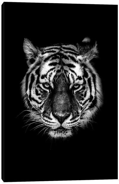 Dark Tiger I Canvas Art Print