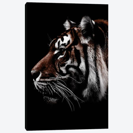 Dark Tiger, Color Canvas Print #WRI40} by Wouter Rikken Canvas Wall Art