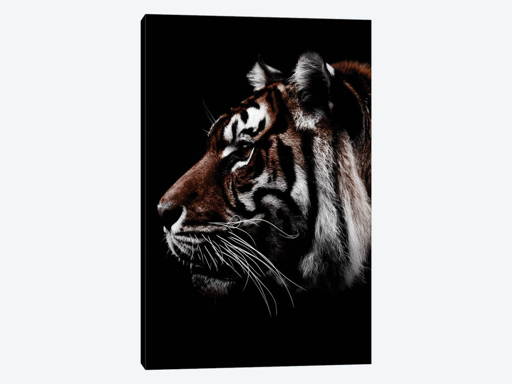 Dark Tiger, Color by Wouter Rikken 1-piece Canvas Art