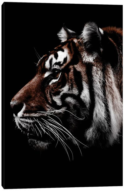 Dark Tiger, Color Canvas Art Print
