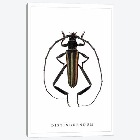 Distinguendum Beetle Canvas Print #WRI46} by Wouter Rikken Canvas Print