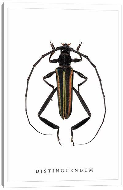 Distinguendum Beetle Canvas Art Print