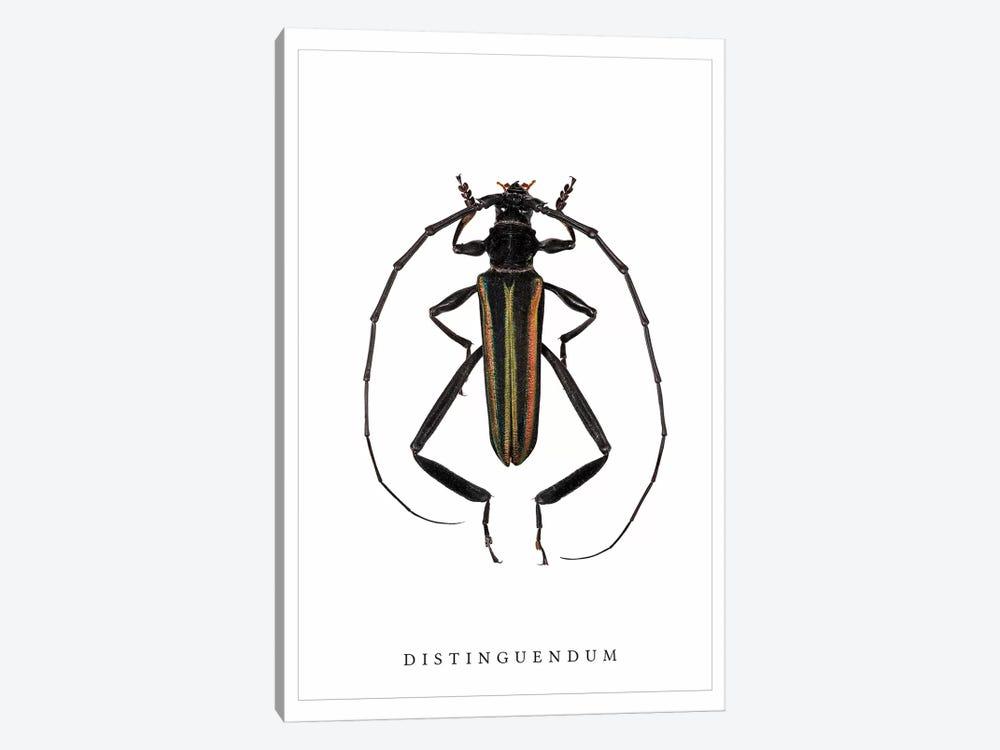 Distinguendum Beetle by Wouter Rikken 1-piece Canvas Artwork