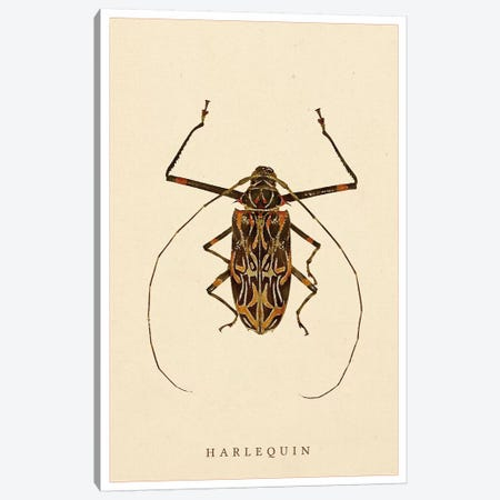 Harlequin Beetle Canvas Print #WRI51} by Wouter Rikken Art Print