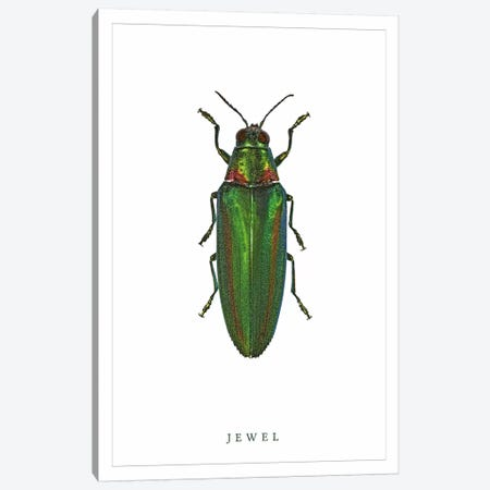 Jewel Beetle Canvas Print #WRI53} by Wouter Rikken Canvas Print