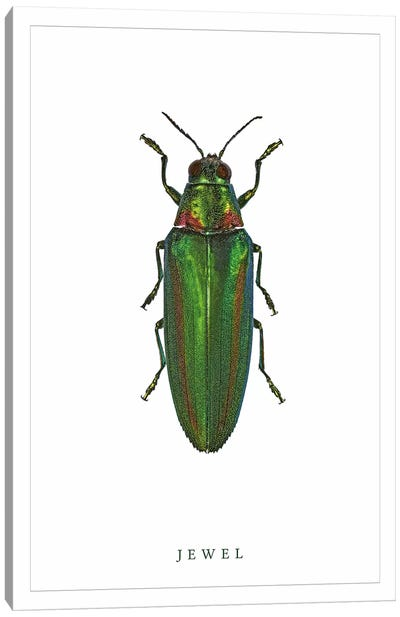 Jewel Beetle Canvas Art Print