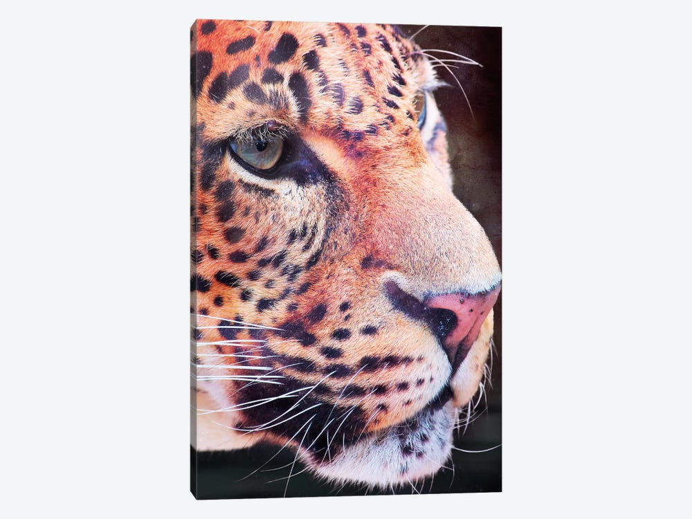 Leopard, Close-Up by Wouter Rikken 1-piece Art Print