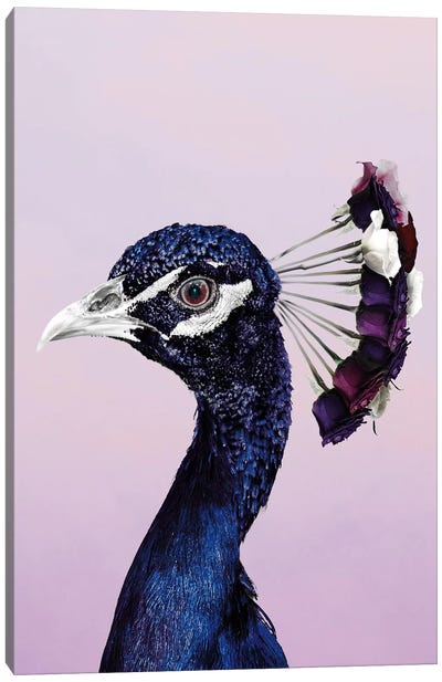 Purplish Peacock Canvas Art Print