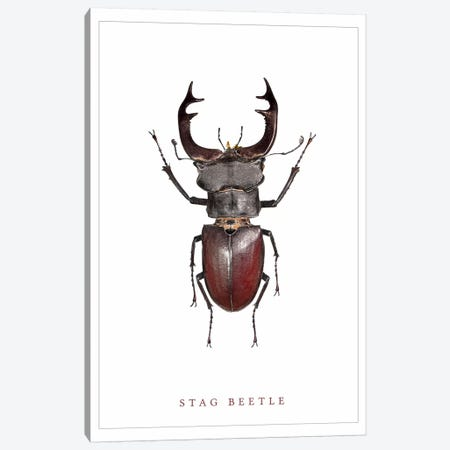 Stag Beetle Canvas Print #WRI66} by Wouter Rikken Canvas Print