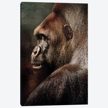 Vintage Gorilla 3-Piece Canvas #WRI71} by Wouter Rikken Canvas Art Print