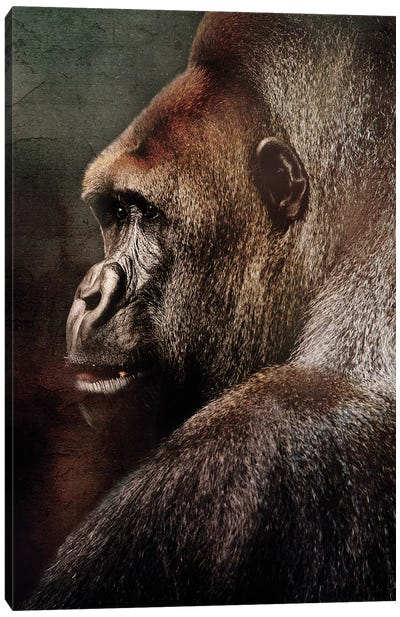 Vintage Gorilla Canvas Art Print