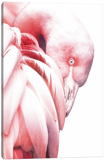 White Flamingo Canvas Art Print