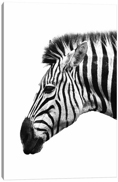White Zebra Canvas Art Print