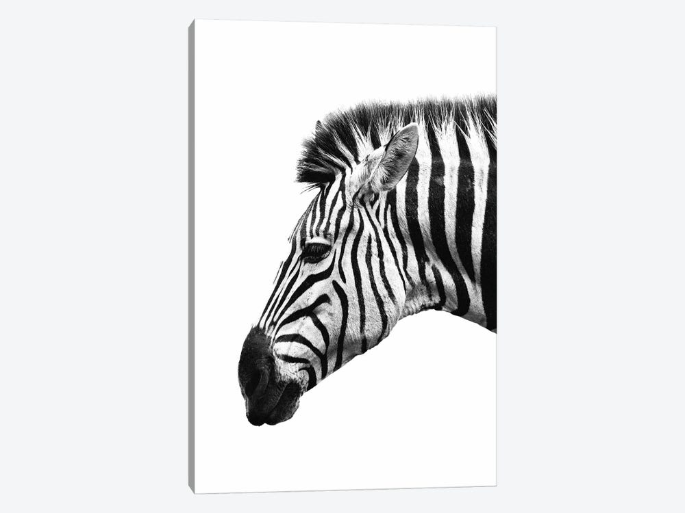 White Zebra by Wouter Rikken 1-piece Canvas Wall Art