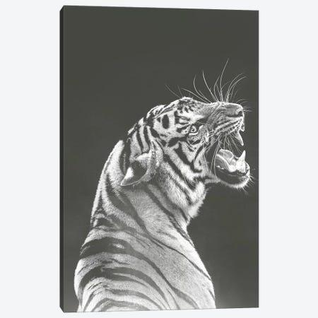 Grey Tiger 3-Piece Canvas #WRI86} by Wouter Rikken Art Print