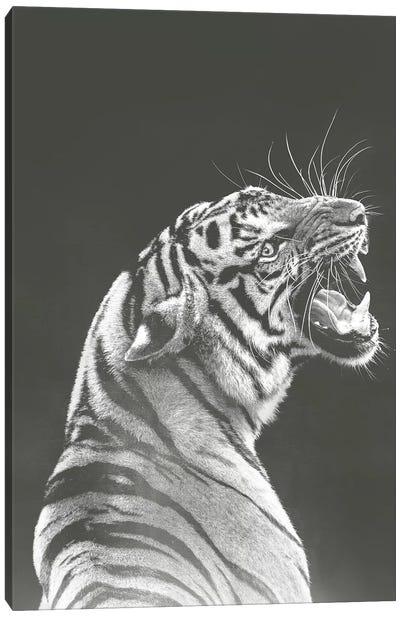 Grey Tiger Canvas Art Print