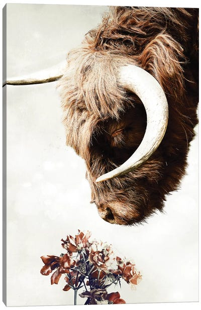 Highlander Canvas Art Print
