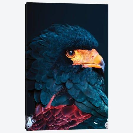 Bateleur Eagle Canvas Print #WRI89} by Wouter Rikken Canvas Artwork