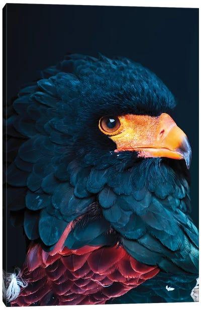 Bateleur Eagle Canvas Art Print