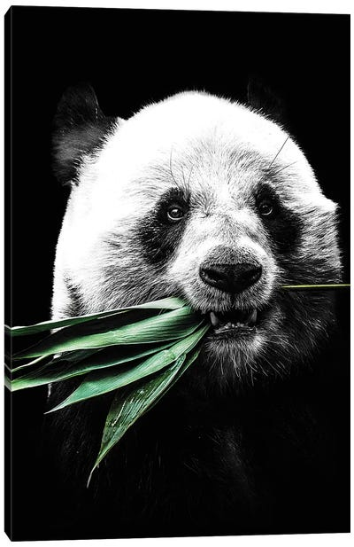 Dark Panda II Canvas Art Print