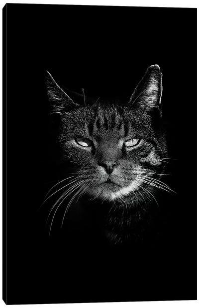 Dark Cat Canvas Art Print