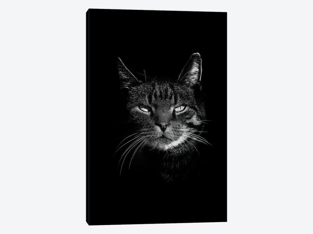 Dark Cat by Wouter Rikken 1-piece Art Print
