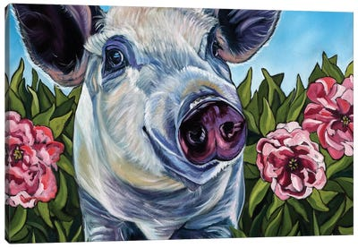 Pigs and Peonies Canvas Art Print