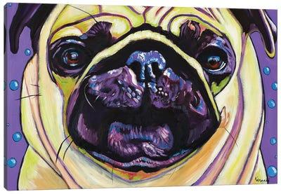 Purple Pug Canvas Art Print