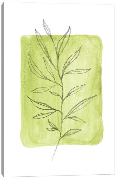 Olive Leaves Canvas Art Print