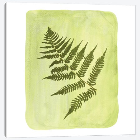 Watercolor Fern Canvas Print #WWY54} by Whales Way Canvas Wall Art
