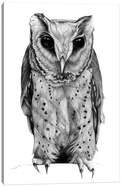 Oriental Bay Owl Canvas Art Print