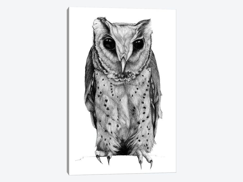 Oriental Bay Owl by Anastasia Alexandrin 1-piece Canvas Art