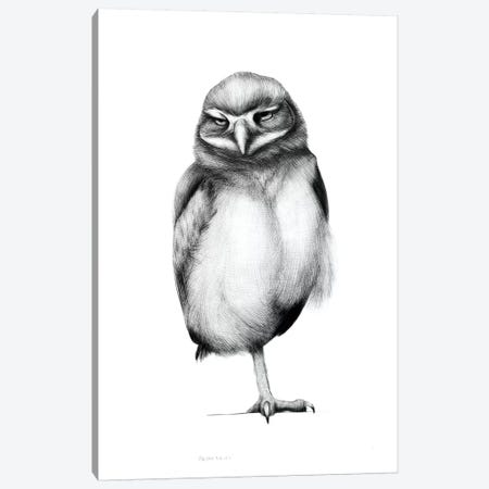 Annoyed Owl Canvas Print #XAN4} by Anastasia Alexandrin Art Print