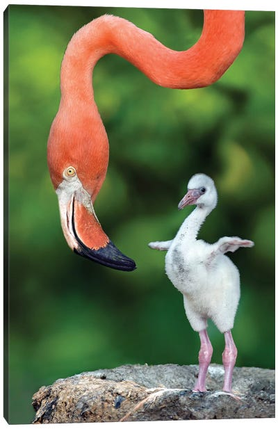 Flamingo With Chick Canvas Art Print