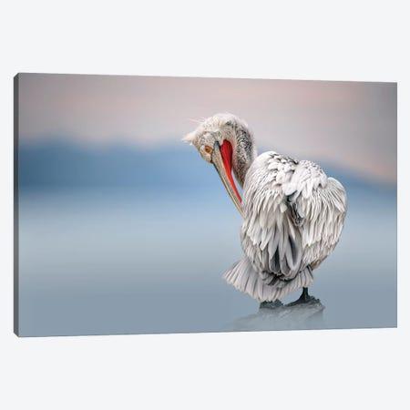 Dalmatian Pelican At Dawn Canvas Print #XOR11} by Xavier Ortega Canvas Art Print