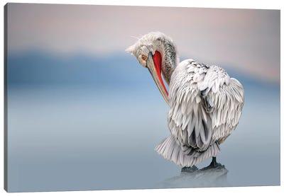 Dalmatian Pelican At Dawn Canvas Art Print