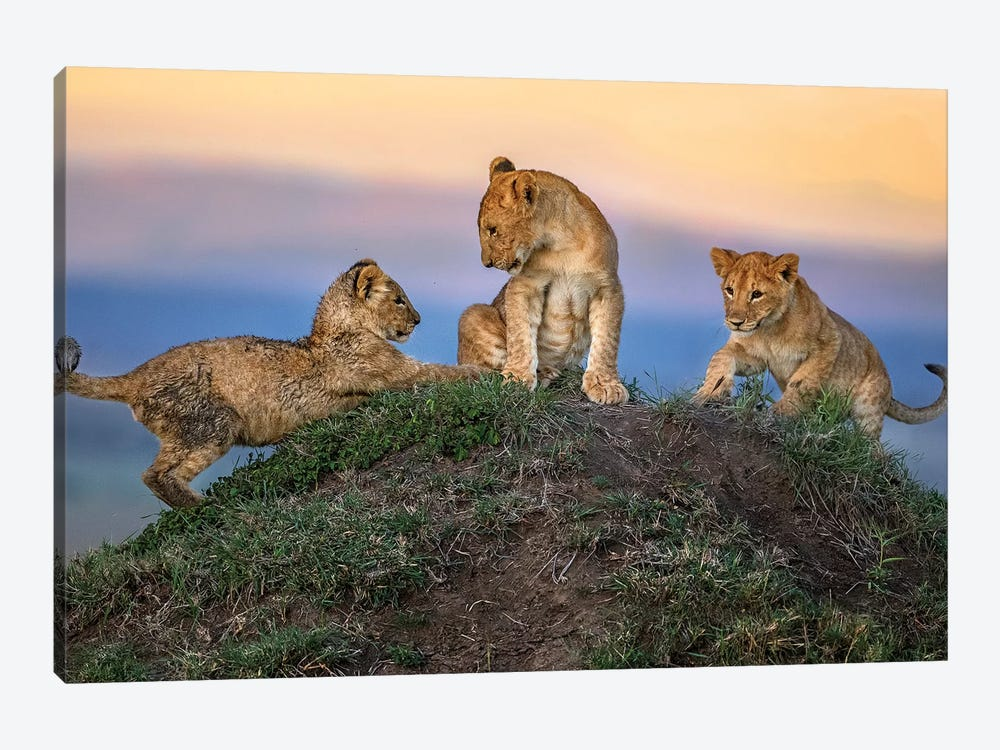 Play Time 1-piece Canvas Print
