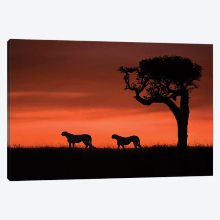 Cheetahs At Dusk Canvas Print #XOR14} by Xavier Ortega Canvas Wall Art