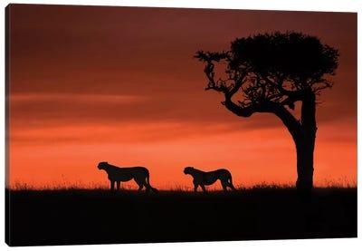 Cheetahs At Dusk Canvas Art Print