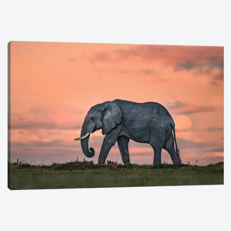 Elephant At Dusk Canvas Print #XOR15} by Xavier Ortega Canvas Wall Art
